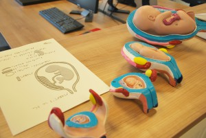 Centre de Transcription - la naissance