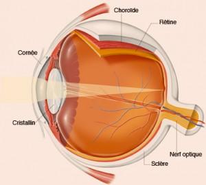 Représentation graphique d'un oeil